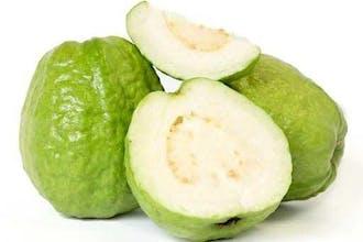 Fruitcup Guava